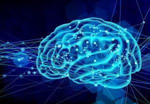 栄養が送られる脳