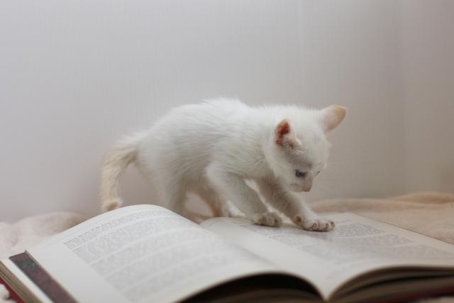勉強中のネコ