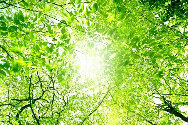素敵な木洩れ日